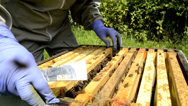 vídeos de stock e filmes b-roll de beekeeper and hive - grupo mediano de animales