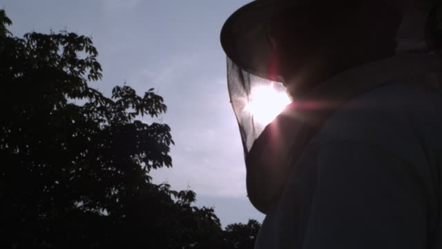 beekeeper backlit by sun, low angle - protective mask workwear stock videos and b-roll footage