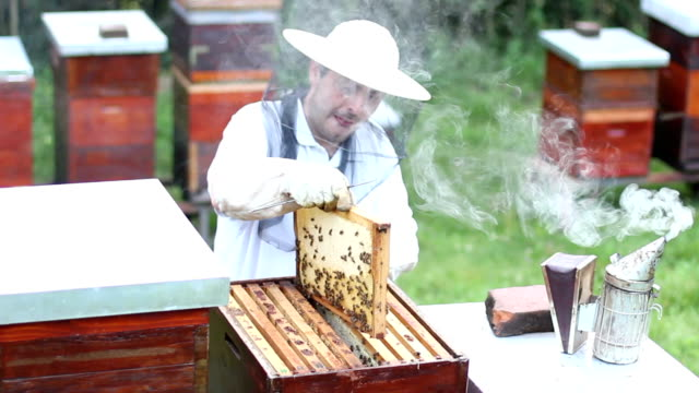 beekeeper checking bee hive - crate stock videos & royalty-free footage