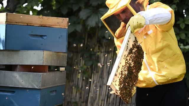 stockvideo's en b-roll-footage met beekeeper checks a beehive on june 20 in turin, italy. the production of artisanal honey in piedmont has grown in the last 20 years, small artisans... - dranken en maaltijden