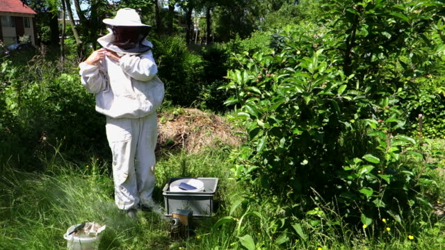 Beekeeper getting dressed for inspection of the hives