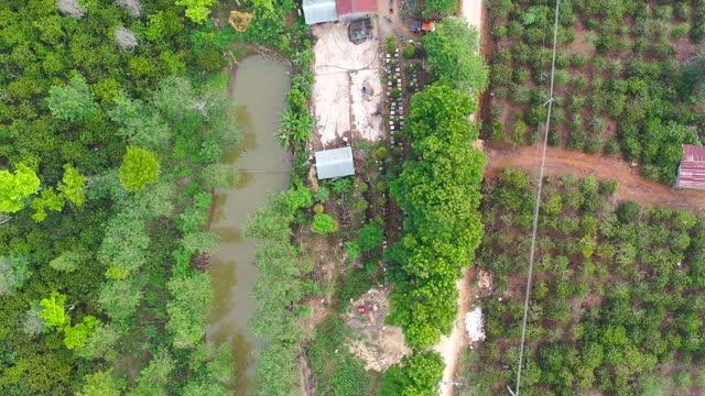 beekeeper harvest honey in the coffee flower season from vietnam - aerial view - 4k resolution - botanik bildbanksvideor och videomaterial från bakom kulisserna
