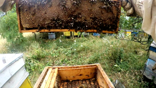 beekeeper in action - bristle animal part stock videos and b-roll footage