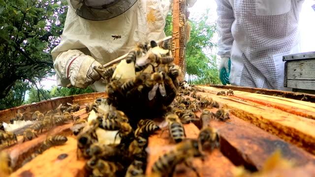 beekeeper in apiary - stinging stock videos & royalty-free footage