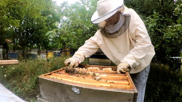beekeeper in apiary - bristle animal part stock videos and b-roll footage