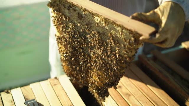 cu beekeeper inspecting a beehive. - beehive stock videos & royalty-free footage