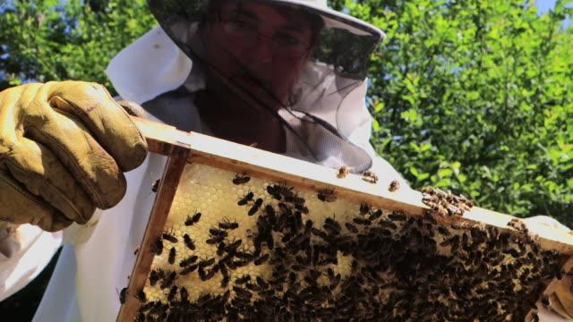 beekeeper inspecting hive - beehive stock videos & royalty-free footage