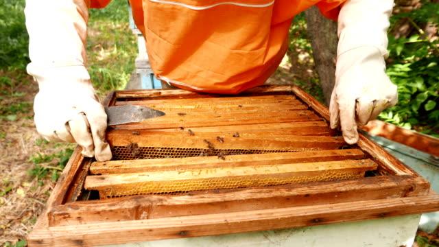 4K imker werkt samen met bijen en bijenkorven op de bijenteelt