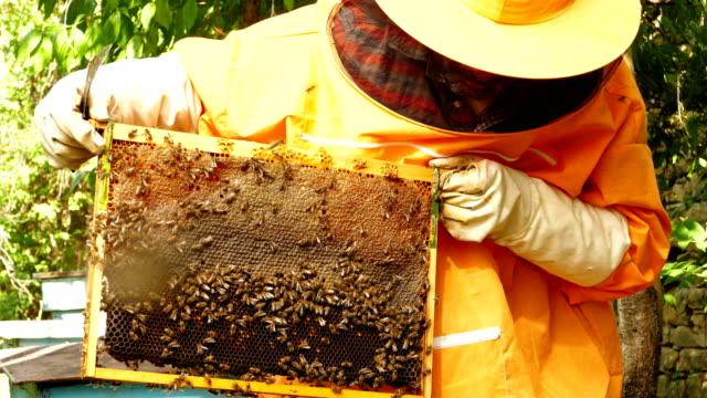 4K arbeitet Imker mit Bienen und Bienenstöcke auf dem Bienenstand