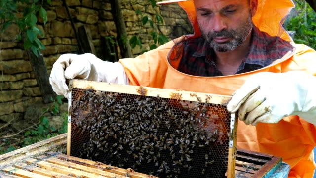 stockvideo's en b-roll-footage met 4k imker werkt samen met bijen en bijenkorven op de bijenteelt - bij