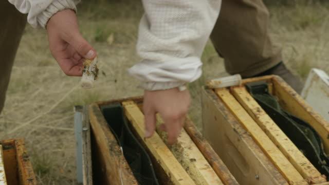 vídeos de stock, filmes e b-roll de beekeeper lifting trays - grupo mediano de animales