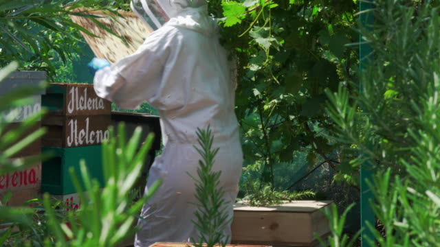 beekeeper maintaining beehives - only mature women stock videos & royalty-free footage