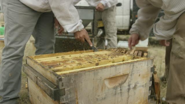 Beekeeper Moving Screens