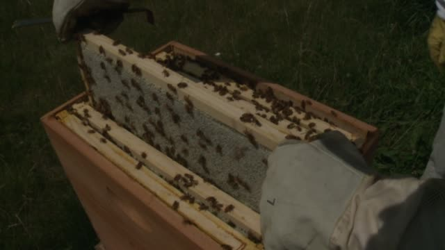 wgn beekeeper pulls out bee covered honey comb at the hilton oak brook resort on july 22 2015 in oak brook illinois - dupage county stock videos & royalty-free footage