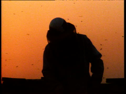 beekeeper silhouetted against orange sunset with bees flying around him, usa - wirbelloses tier stock-videos und b-roll-filmmaterial