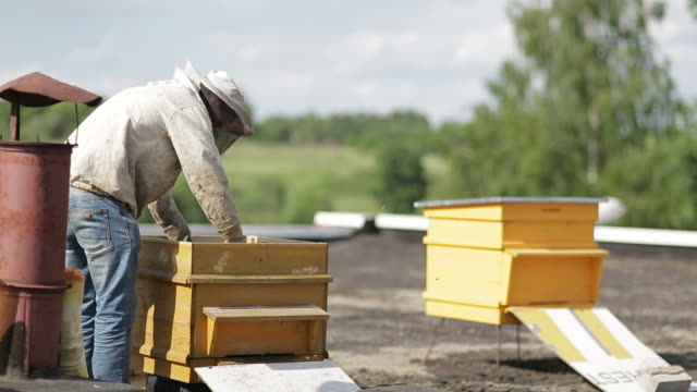 beekeeper with honeycomb - roof stock videos & royalty-free footage