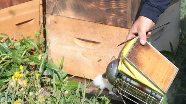 vídeos de stock, filmes e b-roll de apicultor trabalhando e inspecionando a colmeia - abelha obreira