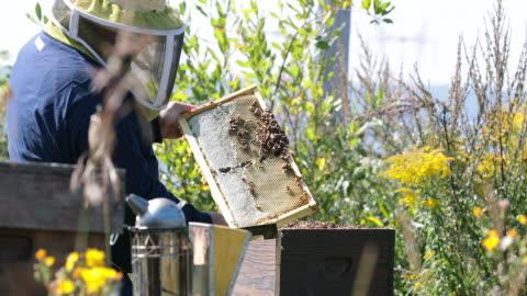 vídeos y material grabado en eventos de stock de apicultor trabajando e inspección colmena - miel