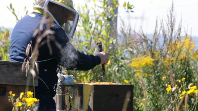 stockvideo's en b-roll-footage met imker werken en inspectie van korf - honingbij