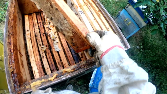 beekeeper working collect honey - bristle animal part stock videos and b-roll footage