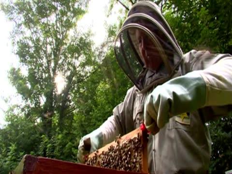 stockvideo's en b-roll-footage met a beekeeper works with a hive - ongewerveld dier
