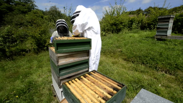 beekeepers and hive - crate stock videos & royalty-free footage