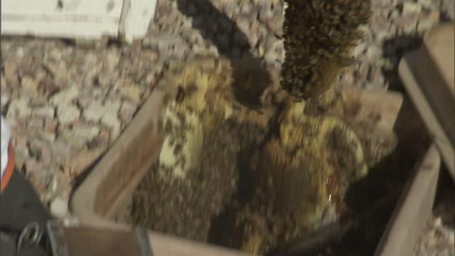 beekeepers relocate killer bees. - invertebrate stock videos & royalty-free footage