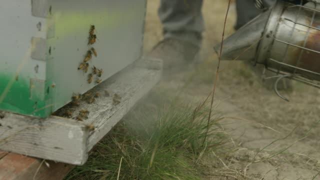 vídeos de stock, filmes e b-roll de beekeepers spraying hive - grupo mediano de animales