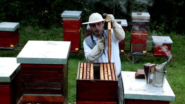 Beekeeping business