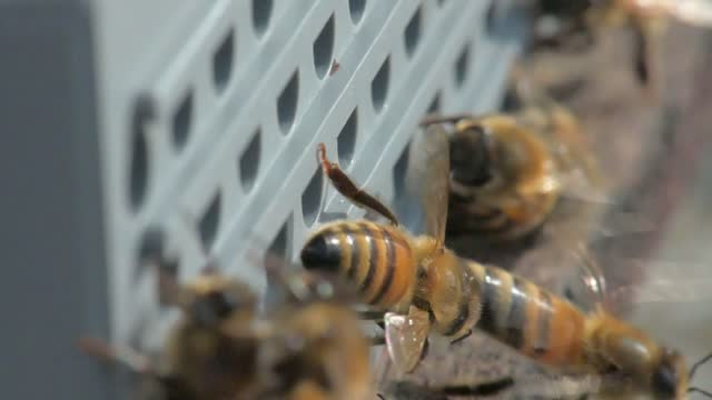 beekeeping honey tradition in nature at forest. video 4k taken by macro and closeup - anticipation stock videos & royalty-free footage