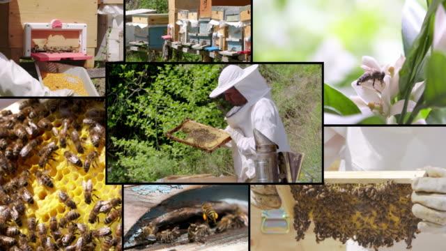 4K FRAME MONTAGE: Beekeeping