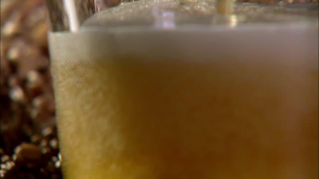 beer fills a glass near a pile of wheat grains. - 醸造所点の映像素材/bロール