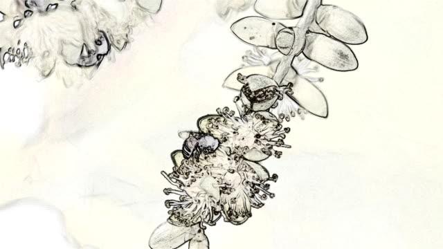 bijen en bloem in potlood bekijken