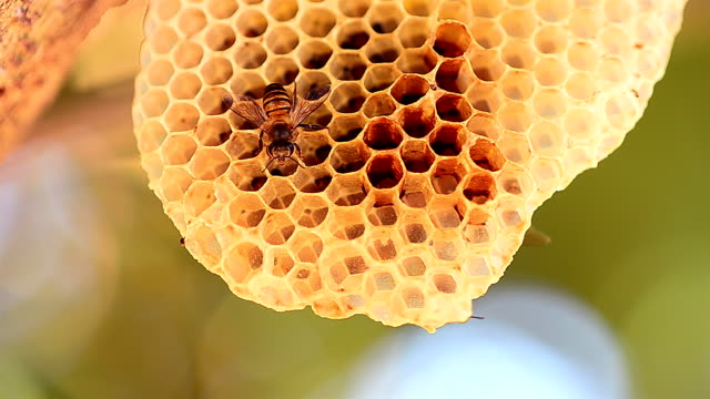 bees and hives