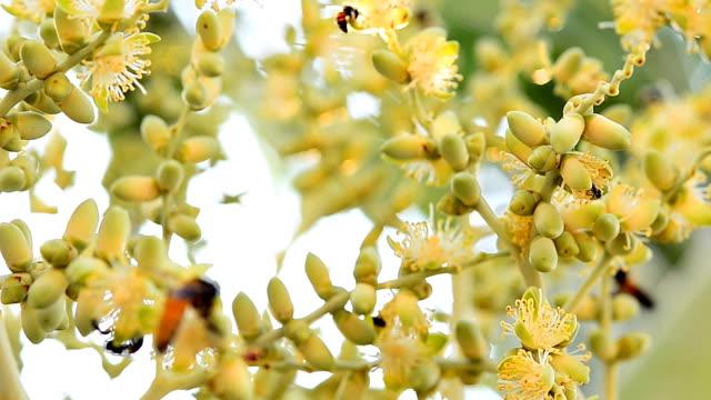 bijen en bijenkorven