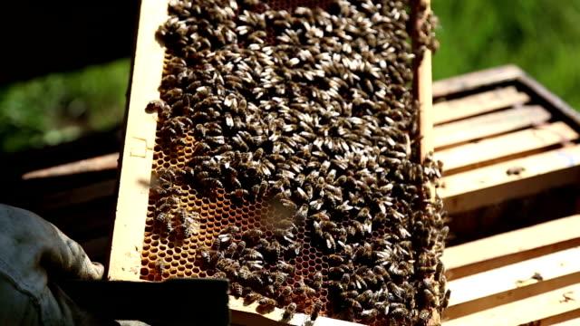 Bienen und Honig im Hive