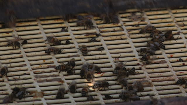Bees are worth more than sixhundredandfifty million pounds to Britain's economy yet we only have 30 percent of the hives we need to fulfil demand...