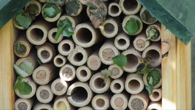 stockvideo's en b-roll-footage met bees come and go from a bee hotel in an english domestic garden. - bij