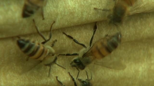 bees crawl around a wooden hive. - gliedmaßen körperteile stock-videos und b-roll-filmmaterial