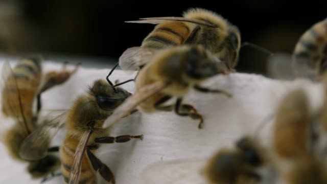 bees crawl around - animal wing stock videos & royalty-free footage