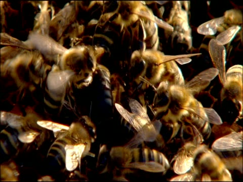 bees filling frame, andalucia, spain - tierfarbe stock-videos und b-roll-filmmaterial