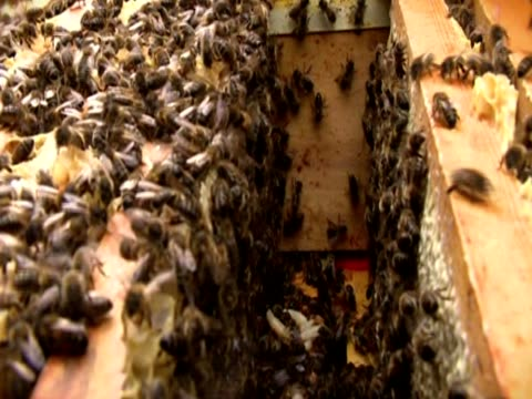 Bees fly and crawl over a hive
