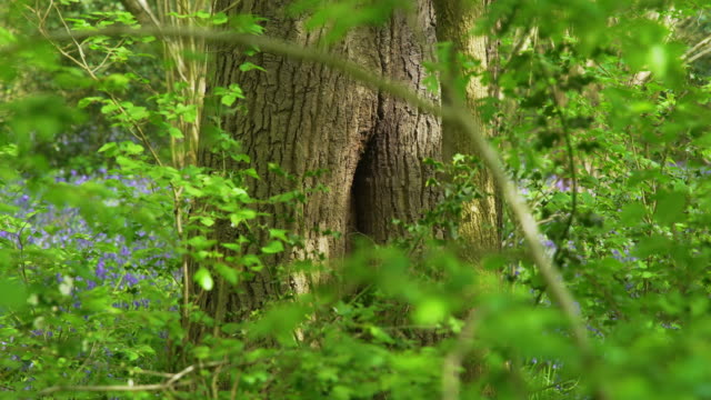 bees fly in and out of hive in hollow of tree trunk - lush stock videos & royalty-free footage