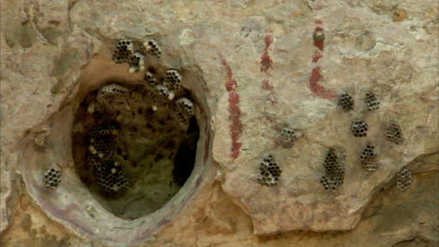 bees fly in and out of the pedra pintada cave in brazil. available in hd. - roraima state stock videos and b-roll footage