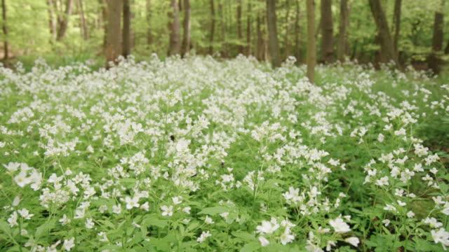 vidéos et rushes de abeilles volant et pollinisant des fleurs sauvages dans la forêt noire - fleur sauvage