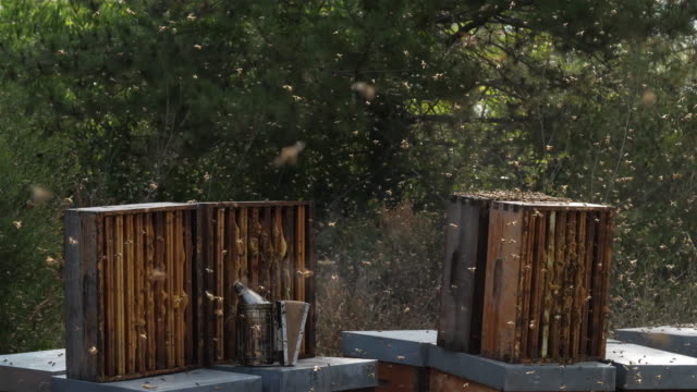 vidéos et rushes de bees flying around the hive during the harvesting honey - abeille