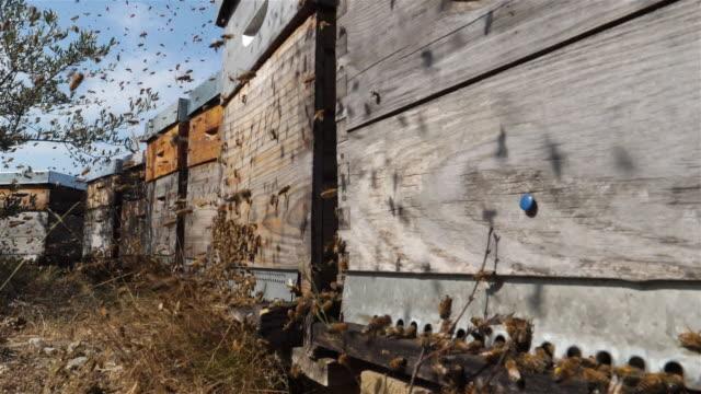 vidéos et rushes de bees flying around the hive - ruche