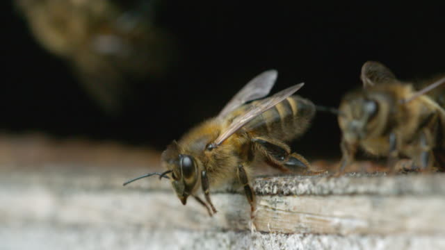 Bees flying in and out of the hive in real time and slow motion