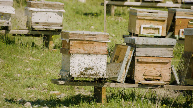 bees going to the hive - super slow motion - colony stock videos & royalty-free footage