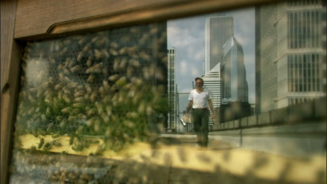vidéos et rushes de cu, bees in beehive on chicago city hall green roof, beekeeper and skyscrapers reflected in glass, illinois, usa - ruche